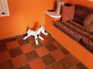 Pinto Doggie