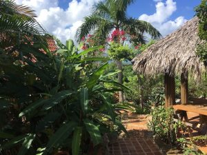 Casita Palm Walkway