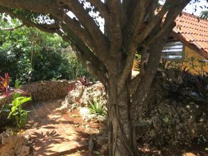 Casita Ficus Entrance